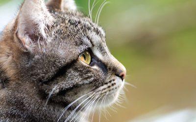 Verkiezing: 'Het leukste huisdier van Dierenartsenpraktijk Westerbork'